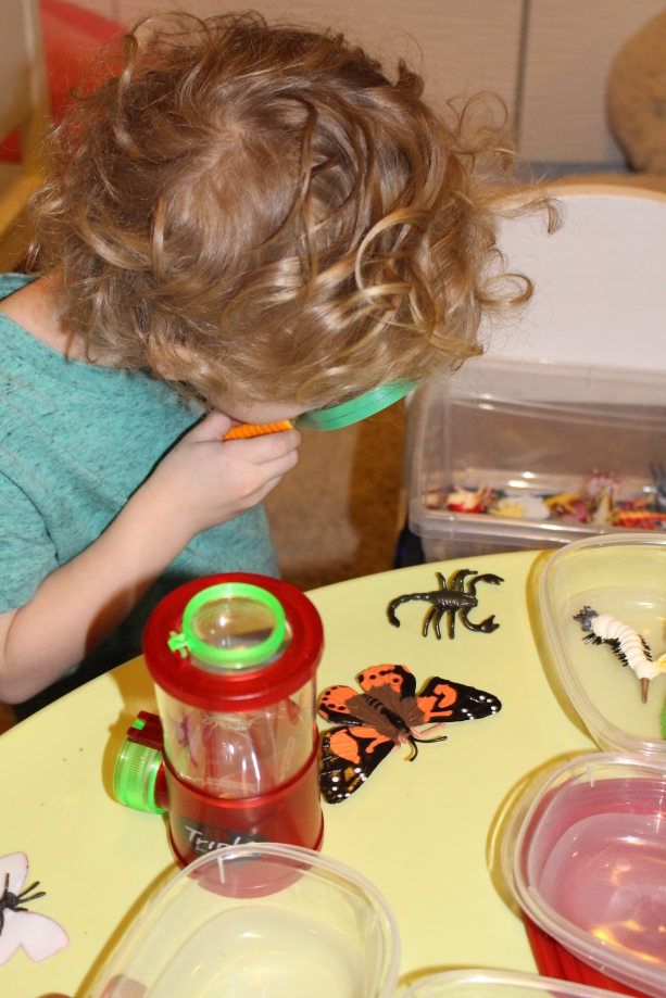 This preschooler carefully examines some insect life cycle models.