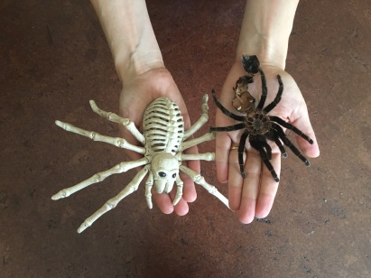 Which one is the real tarantula exoskeleton? (OK I'll tell you it's the one on the right.)
