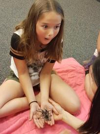 There's no feeling like holding a tarantula for the first time.